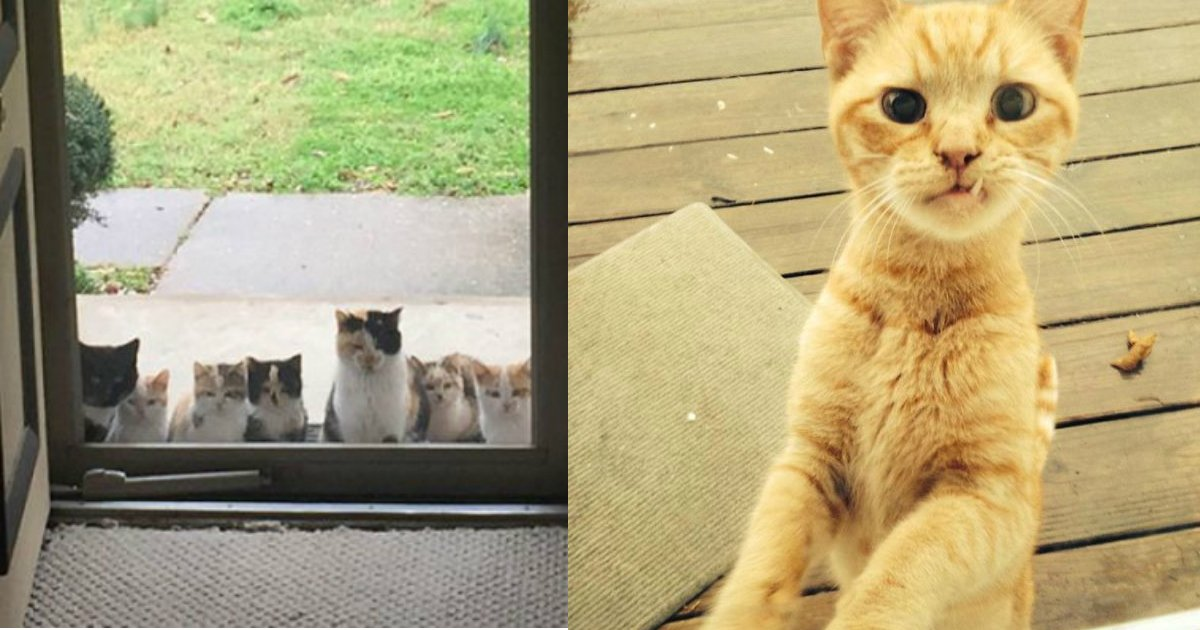 """7 1.jpg?resize=636,358 - 20 Of The Funniest """"I Don't Own A Cat"""" Moments That Ever Happened To People"""