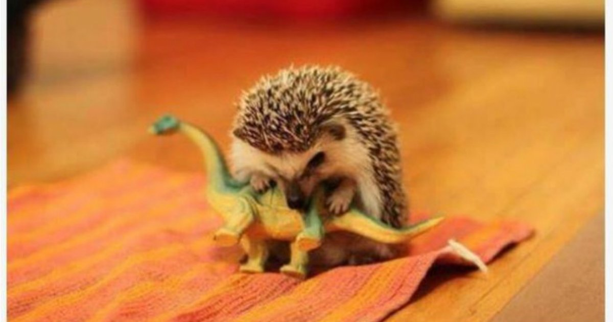 7 147.jpg?resize=1200,630 - 20 Adorable Animals Trying To Look Tough But Failing Miserably