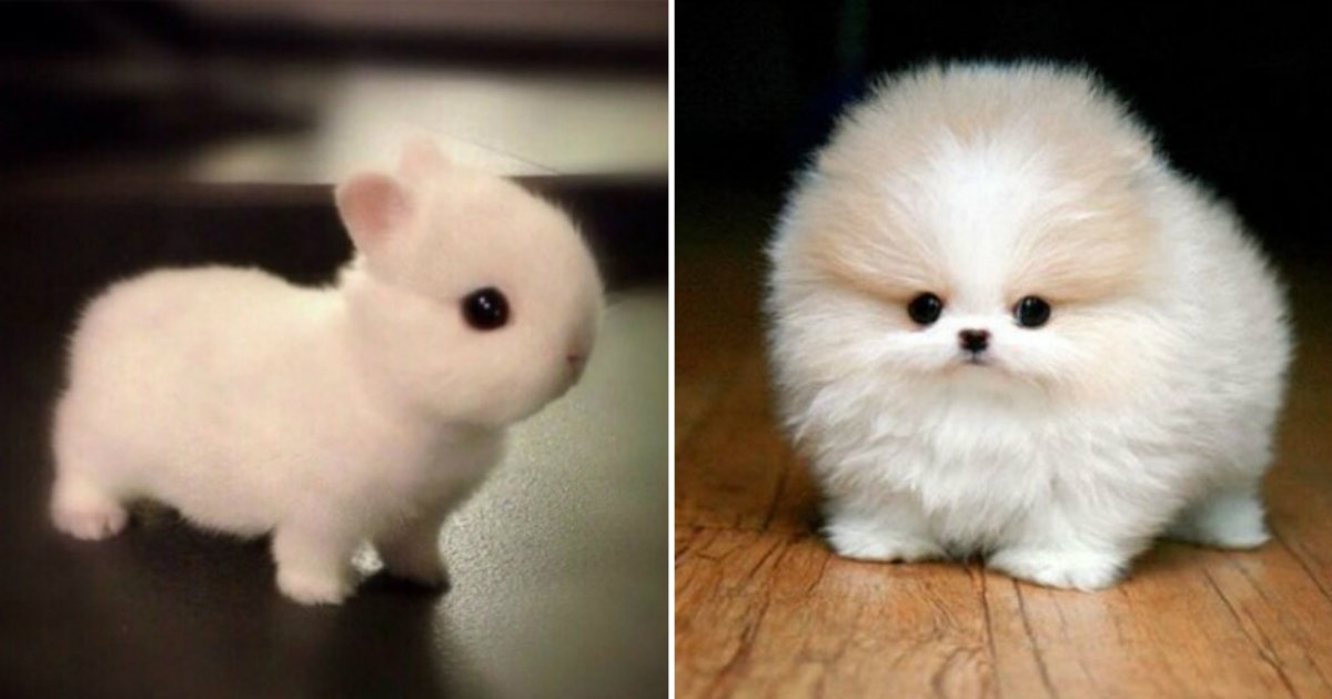 7 155.jpg?resize=1200,630 - These 32 adorable animals will make your heart explode from cuteness. Is #4 even real?