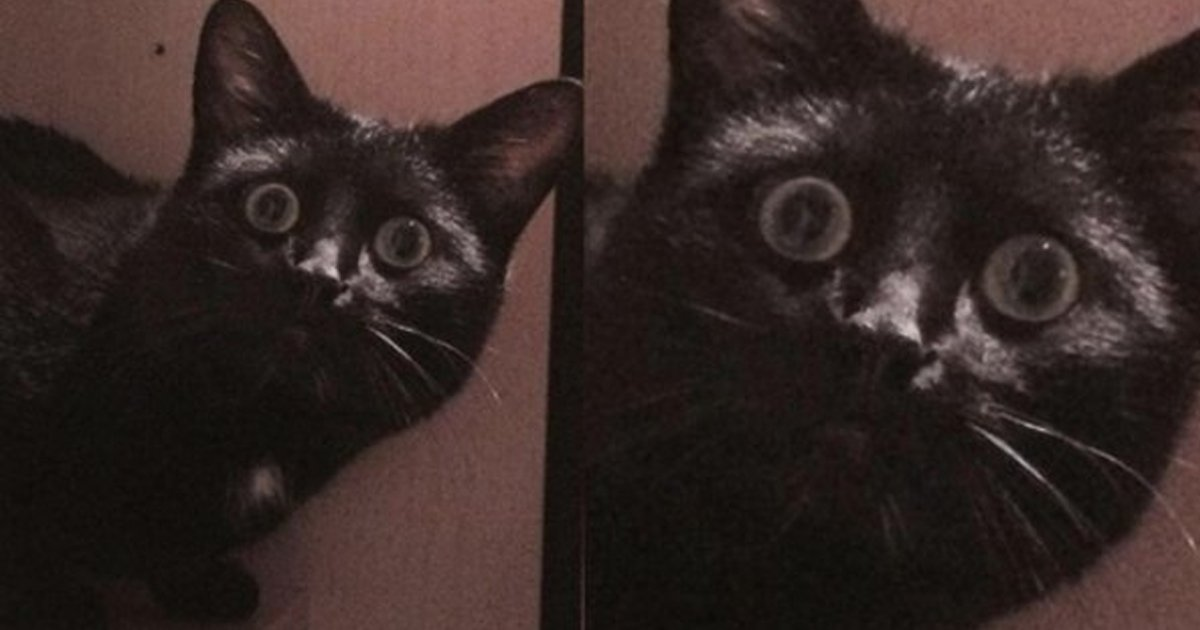 7 175.jpg?resize=1200,630 - 16 Cats Who Just Saw A Ghost
