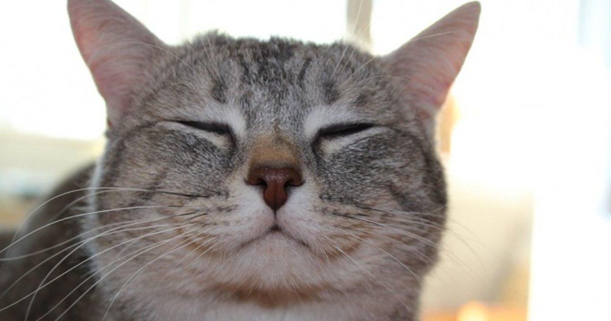 7 52.jpg?resize=1200,630 - 13 Indicios de que tu gato te adora