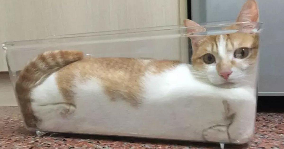 7 68.jpg?resize=1200,630 - 22 gatos que desafían todas las propiedades conocidas de los sólidos