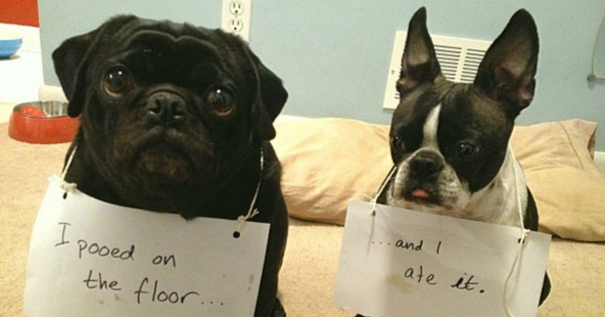 8 154.jpg?resize=1200,630 - 36 naughtiest dogs and cats confessing their dirty crimes