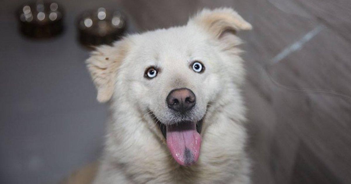 "8 34.jpg?resize=1200,630 - 16 Personas que adoptaron a una mascota espontáneamente, solo porque sintieron que era ""la indicada"""