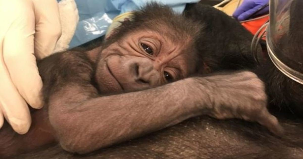 8 35.jpg?resize=636,358 - These 19 Animal Pictures Will Touch Your Heart So Hard