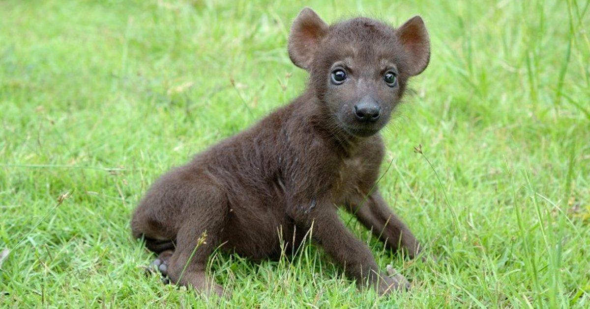 8 53.jpg?resize=1200,630 - 12 Fotos de bebés de los depredadores más feroces del mundo