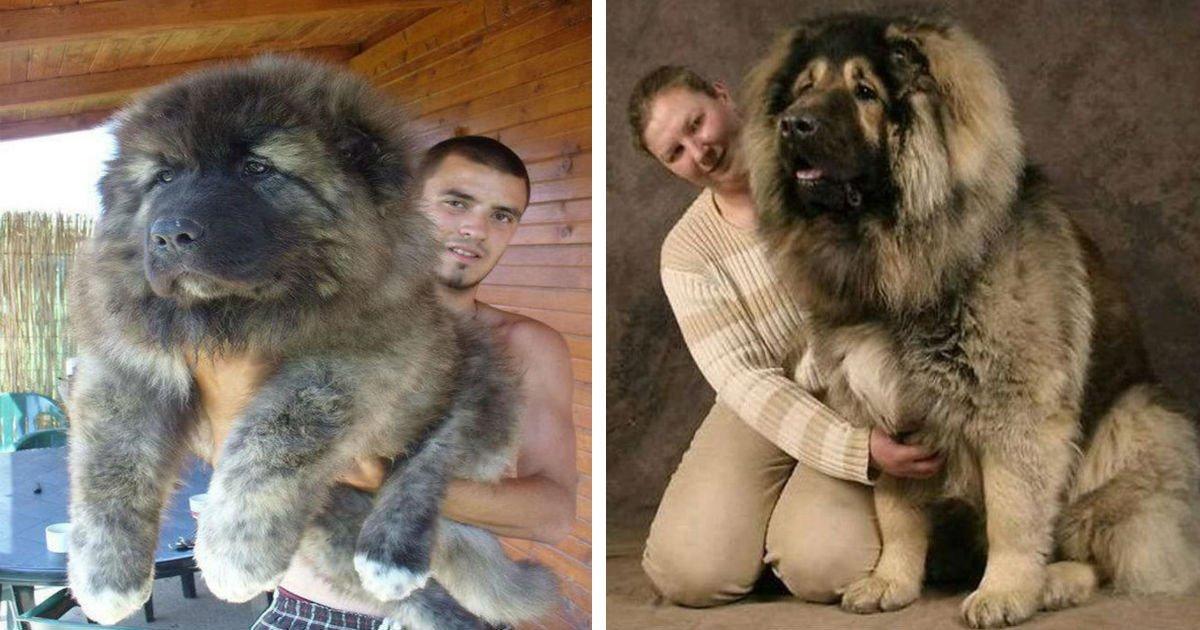 9 10 1.jpg?resize=1200,630 - 19 images d'animaux si adorables qu'ils feront fondre votre cœur.
