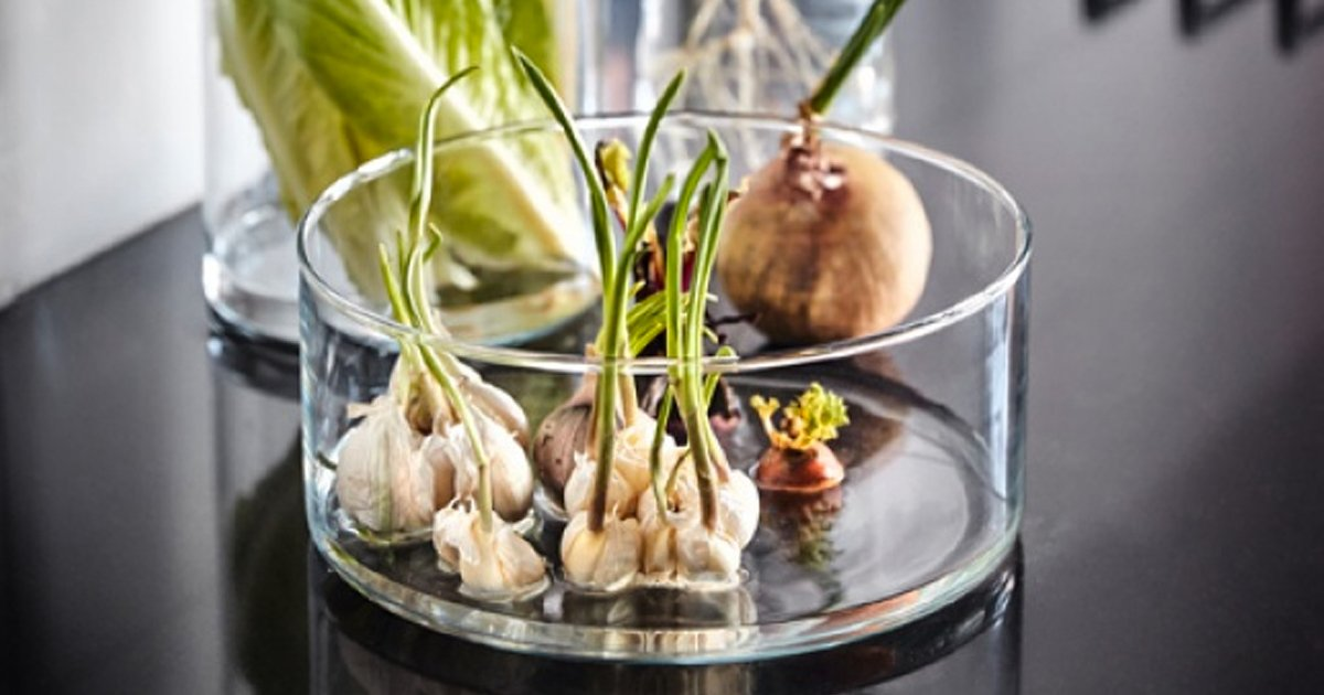 9 11.jpg?resize=412,232 - 19 Flores y verduras que puedes cultivar en un vaso con agua
