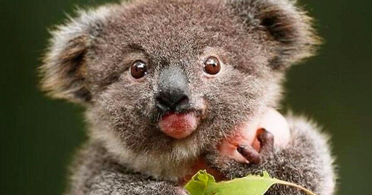 9 113.jpg?resize=1200,630 - 19 Animales con detalles únicos que harán que simplemente te enamores de ellos