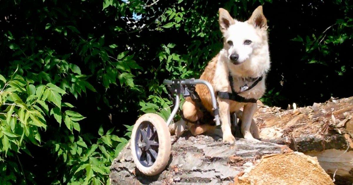 9 162.jpg?resize=1200,630 - 24 Historias del verdadero amor y amistad entre un ser humano y un animal