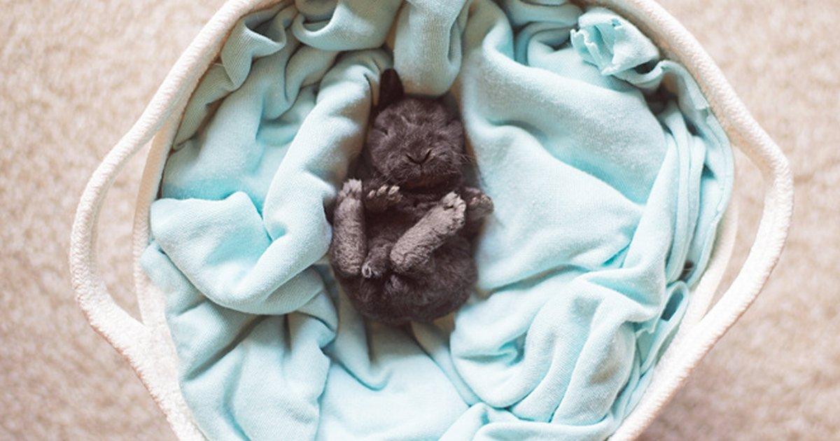 9 26.jpg?resize=1200,630 - Estas fotografías de adorables animales derretirán el corazón de todos