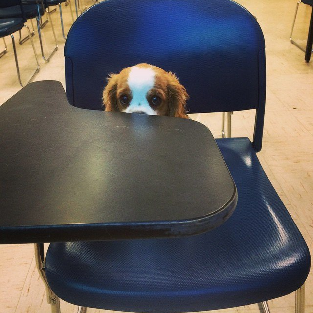 Puppy sitting in school desk chair.