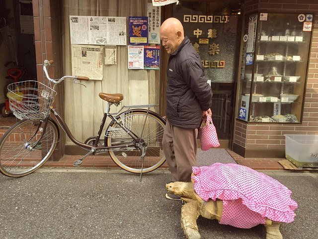 Tortoise in a pink outfit walking next to man holding a matching pink tote bag.