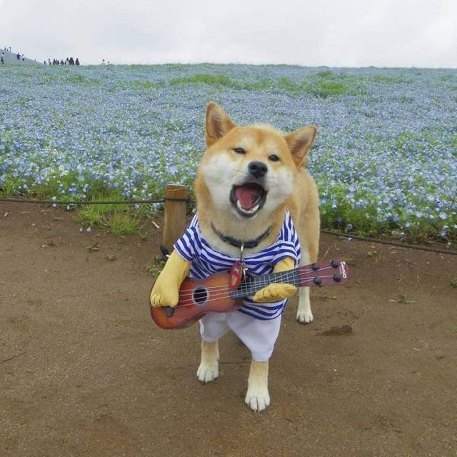 Dog in a costume looking like he