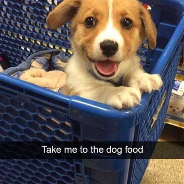 Puppy going grocery shopping!