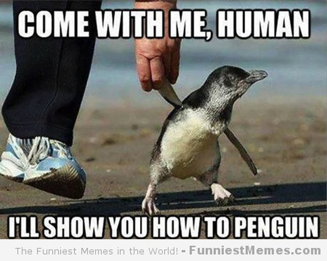 24 Memes That Prove Penguins Are The Funniest Animals On Earth