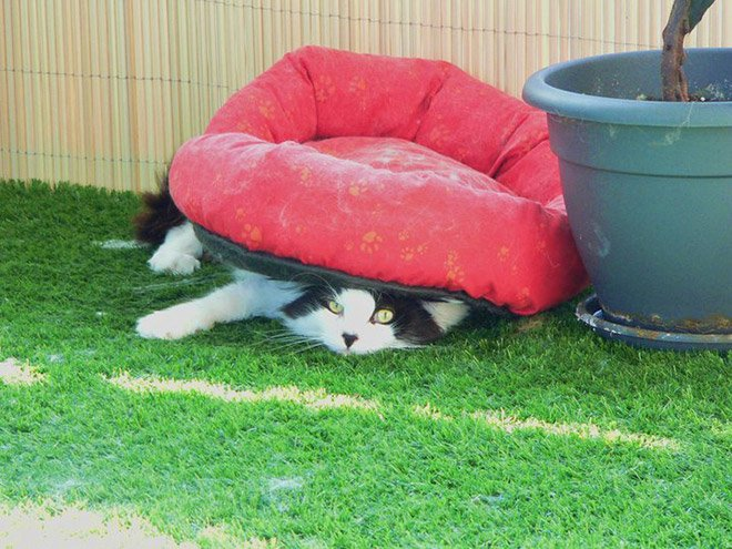 16 Hilarious Photos Proving That Cats Think Different. #8 Is Just Brilliant.