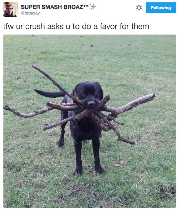 18 Hilarious Tweets About Animals That Will Make Your Day So Much Better