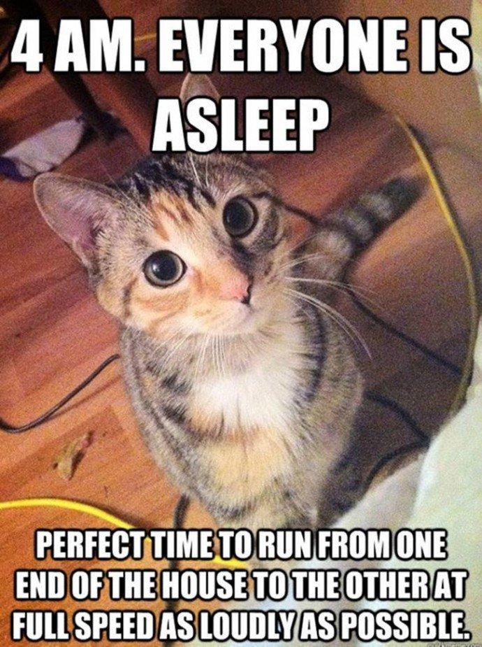 19 Moments Of Kooky Cat Logic