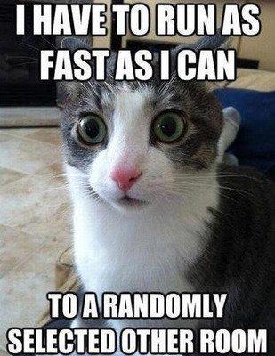 via: cattime.com