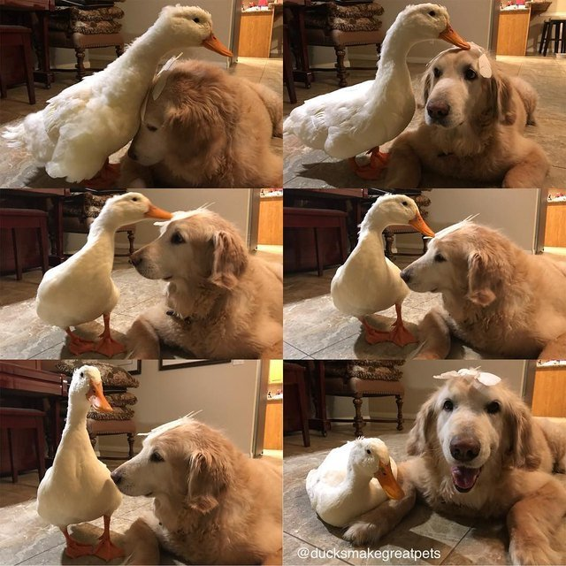 Dog and duck.