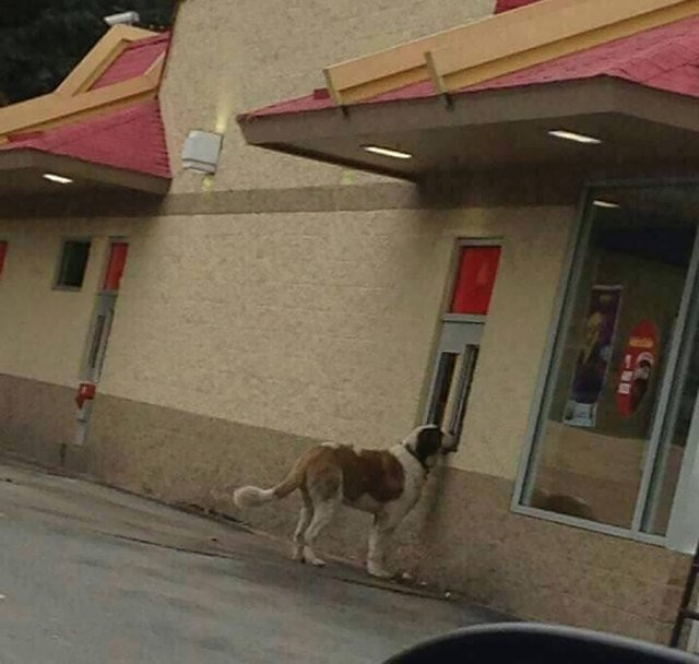Dog ordering in drive thru
