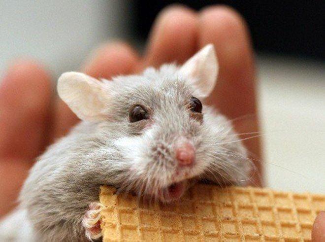23-hilarious-photos-of-surprised-animals-10