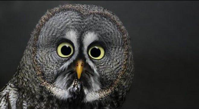 23-hilarious-photos-of-surprised-animals-13