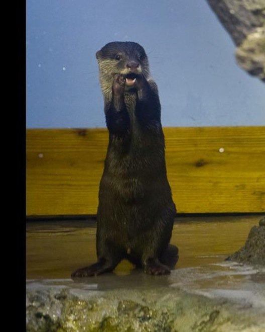 23-hilarious-photos-of-surprised-animals-18