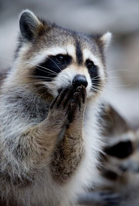 23-hilarious-photos-of-surprised-animals-19