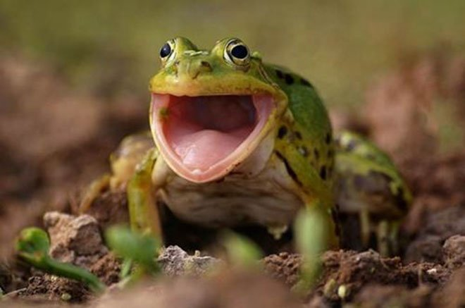 23-hilarious-photos-of-surprised-animals-21