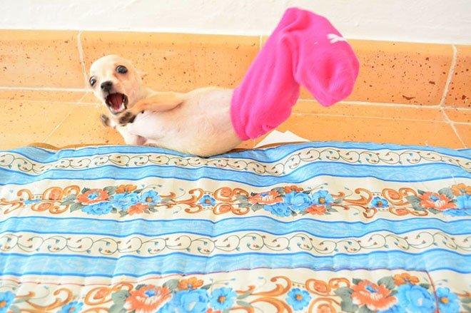23-hilarious-photos-of-surprised-animals-22