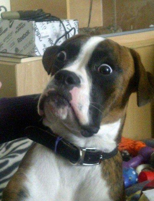 23-hilarious-photos-of-surprised-animals-3