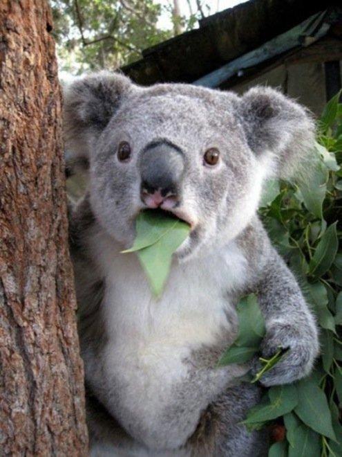 23-hilarious-photos-of-surprised-animals-8