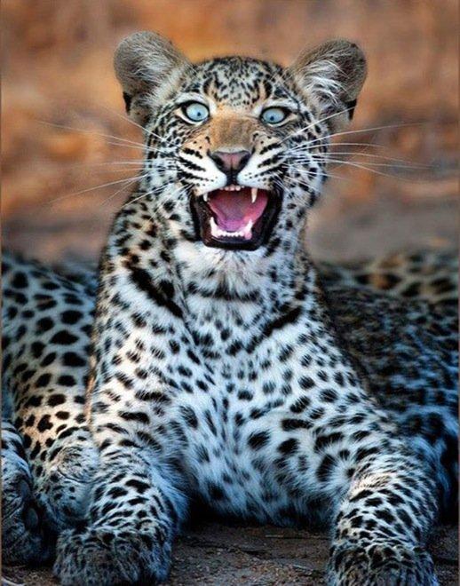 23-hilarious-photos-of-surprised-animals-9
