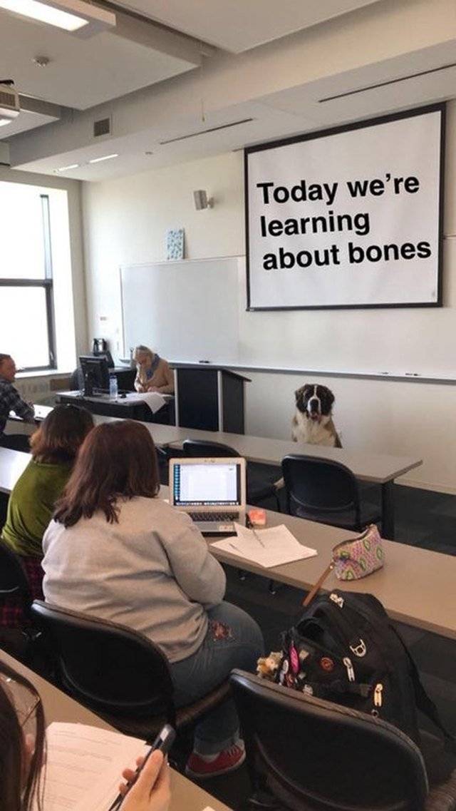 Dog sitting in front of classroom.
