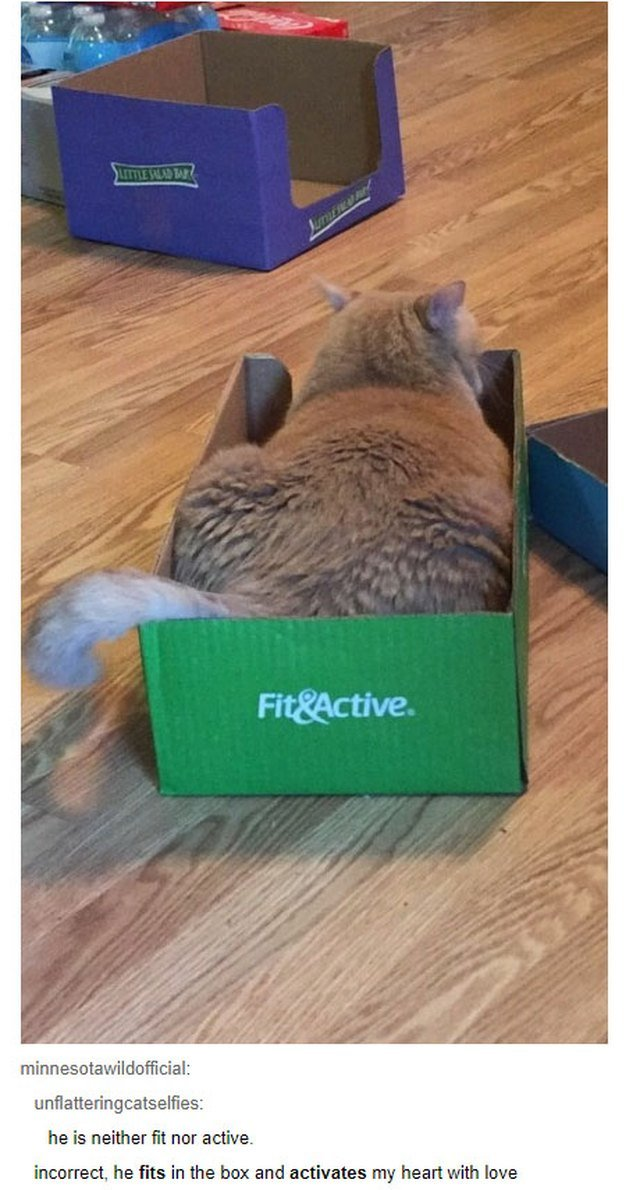"""Fat catting sitting in box labeled """"Fit&Active"""""""