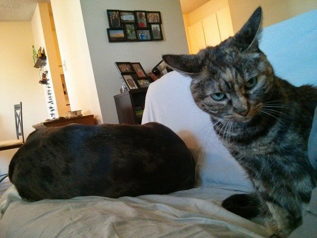 Cat looking annoyed at dog