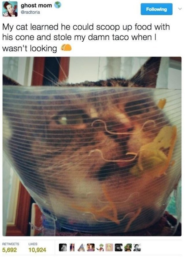 Tweeted photo of cat using cone of shame to scoop up food.