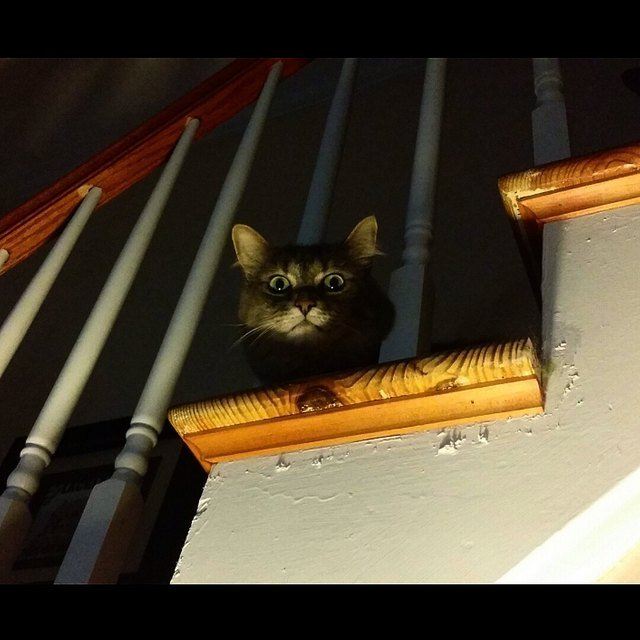 Cat lurking on staircase.