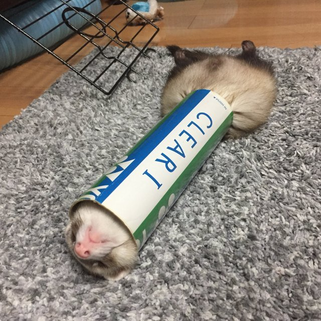 Pets contorted into weird sleeping positions will never not be funny