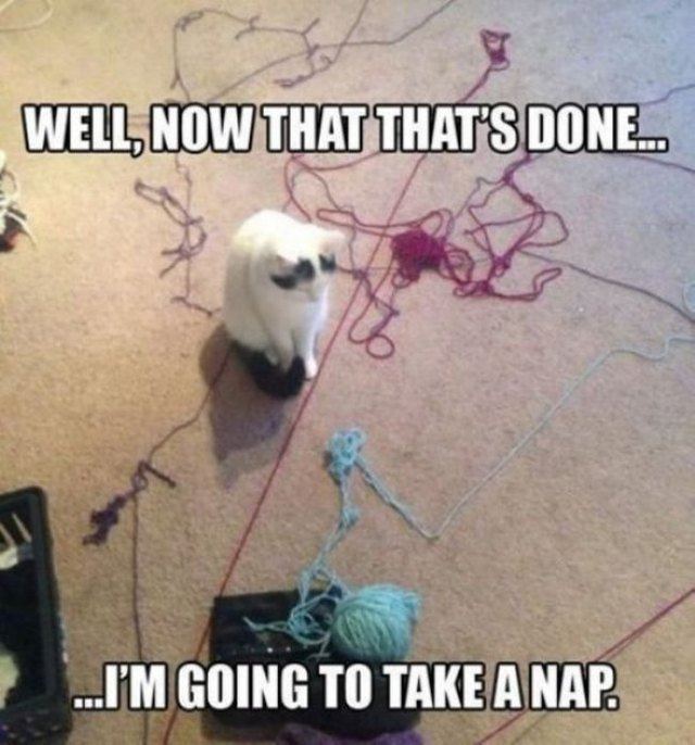 Cat looking at scattered yarn.
