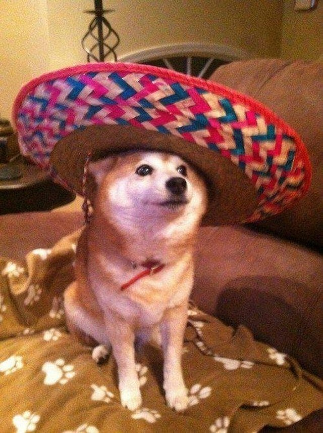 Dog wearing a sombrero