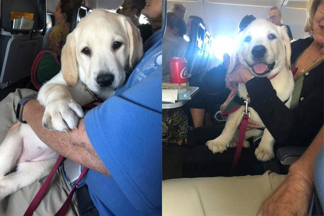 Dogs on planes