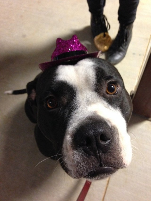 Dog wearing sparkly pink cowboy hat.