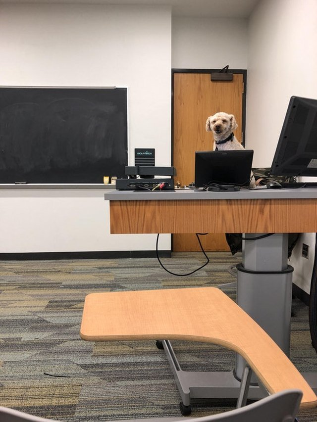Dog behind teacher