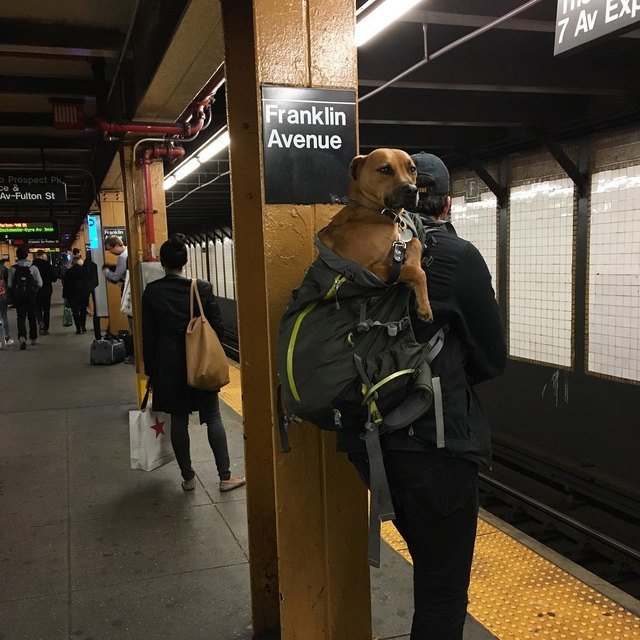 Dog in backpack.
