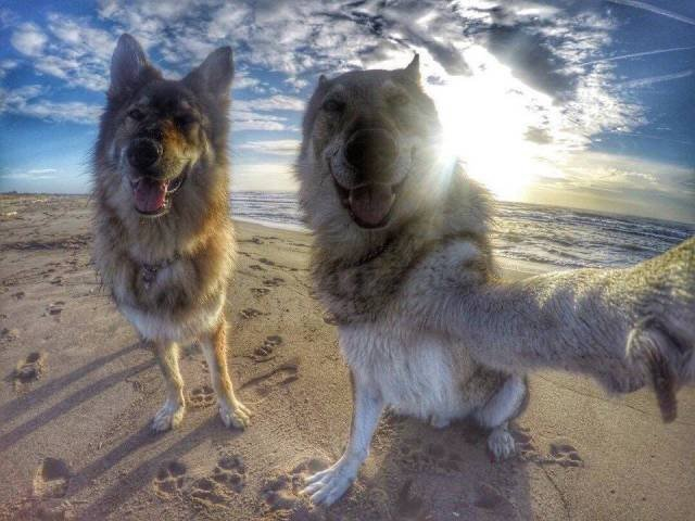 Dogs doing a selfie on the beach