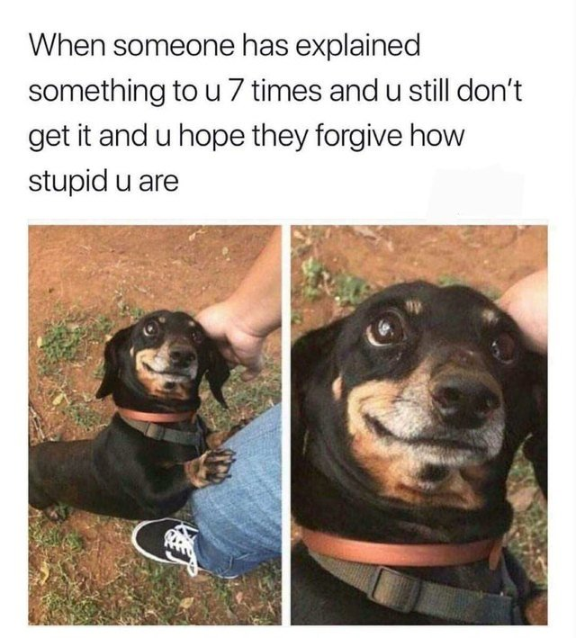 Dog looking confused