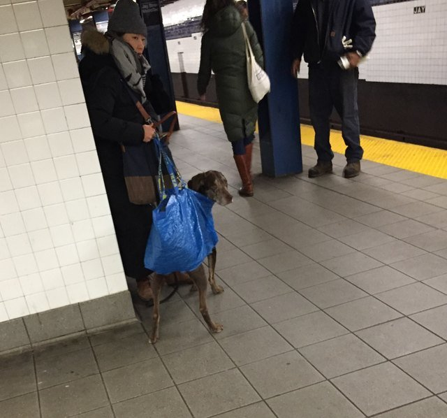 Dog in tote bag